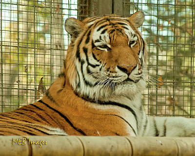 Photograph - Regal Pose by Margaret Buchanan