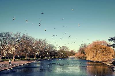 Of Birds Photograph - Regent's Park by DarkRigel