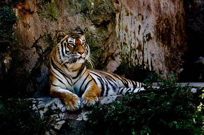 Cat Photograph - Relaxing Tiger by Hakon Soreide