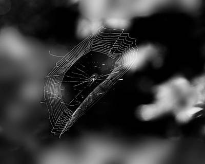 Spiderweb Photograph - Released by Susan Capuano