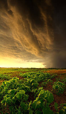 Relief Art Print by Phil Koch