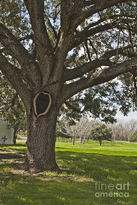 Photograph - Remember Goliad by Kim Henderson
