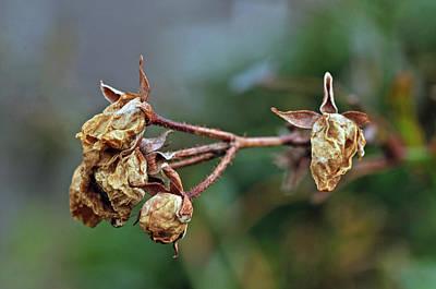 Dried Photograph - Remnants by Danielle Del Prado