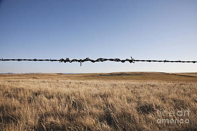 Repaired Strand Of Barbed Wire Art Print by Jetta Productions, Inc