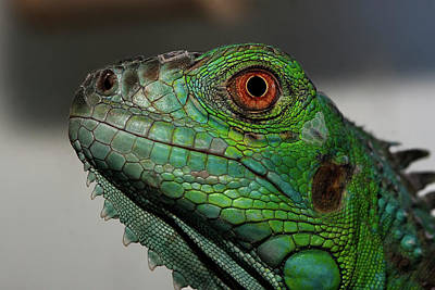 Part Of Photograph - Reptil by Martin Zalba is a photographer looking for a personal look,