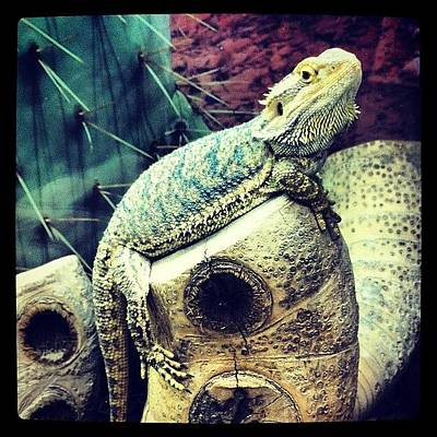 Dragon Photograph - #reptile #lizard #dragon #beardedgragon by Boo Mason