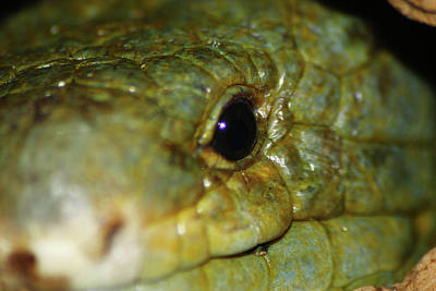 Photograph - Reptile Smile by Scott Hovind
