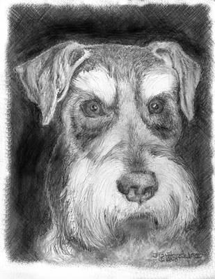 Rescue Dog-kirby Minature Schnauzer Art Print by Jim Hubbard