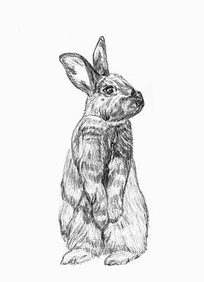 Rescued Rabbit Art Print by Katherine Dohnalek
