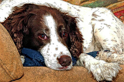 Photograph - Rest Time For Bella by James Steele