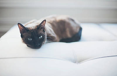 Resting Cat Art Print by Cindy Loughridge