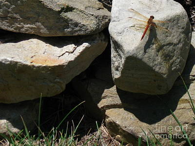 Art Print featuring the photograph Resting Dragonfly  by Nancy Patterson