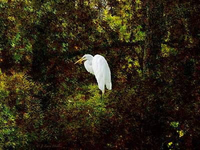 Resting Egret Art Print by J Larry Walker