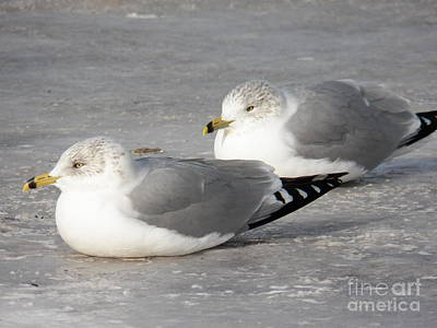 Photograph - Resting On The Ice by Judy Via-Wolff