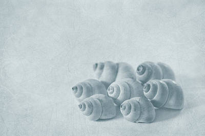 Seashell Photograph - Return To Innocence by Evelina Kremsdorf