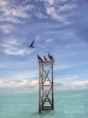 Revised Image Of Birds On Wooden Stand In The Ocean Off Key West Art Print by Christopher Purcell