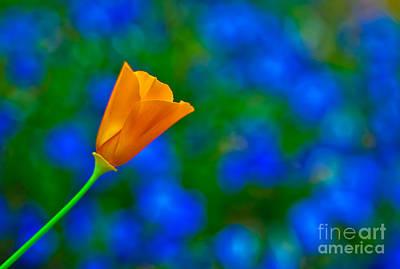 Rhapsody In Orange And Indigo Original