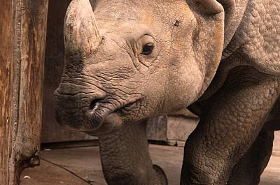 Photograph - Rhinoceros by Puzzles Shum