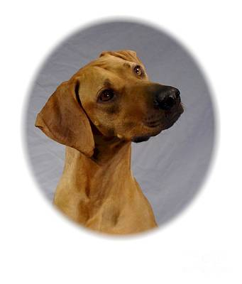 Ridgeback Digital Art - Rhodesian Ridgeback 429 by Larry Matthews