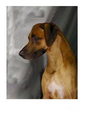 Ridgeback Digital Art - Rhodesian Ridgeback 75 by Larry Matthews