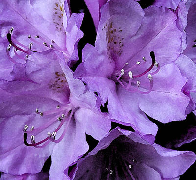 Art Print featuring the photograph Rhododendron II by Michael Friedman