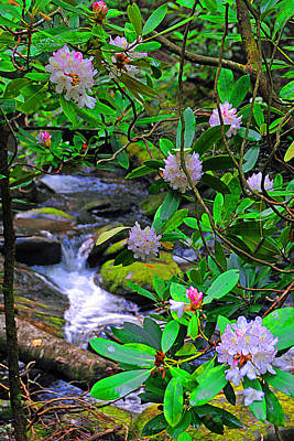 Photograph - Rhododendron Waters by Alan Lenk