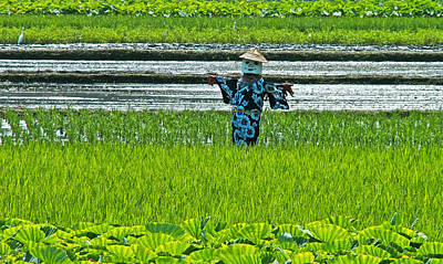 Rice Field - Okinawa Art Print by Jocelyn Kahawai