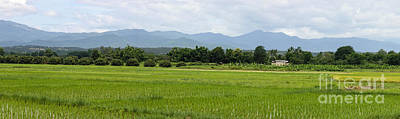 Photograph - Rice Field Panorama by Fran Woods