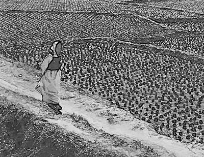 Photograph - Rice Field Stroll by Dale Stillman