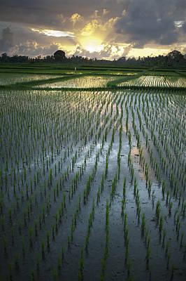 Rice Fields, Near Ubud Bali, Indonesia Art Print by Huy Lam
