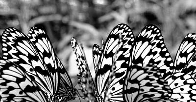 Photograph - Ricepaper Butterflys by Jocelyn Kahawai