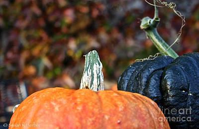 Photograph - Rich Autumn Colors by Susan Herber