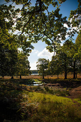 Photograph - Richmond Park by Lenny Carter
