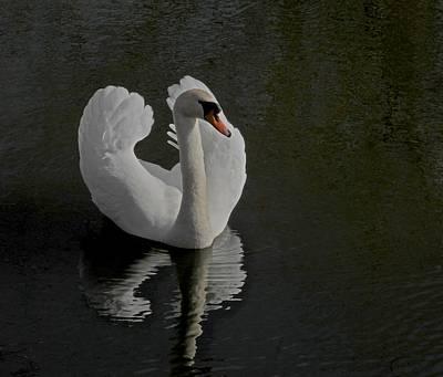White Swan Photograph - Ride A White Swan by Odd Jeppesen
