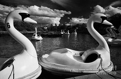 Town Lake Park Photograph - Ride On Swans In The Pickie Fun Park In Bangor County Down by Joe Fox