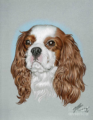 Spaniel Drawing - Riley by Marshall Robinson