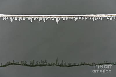 Rimy Rope 2.1 Art Print by Heiko Koehrer-Wagner