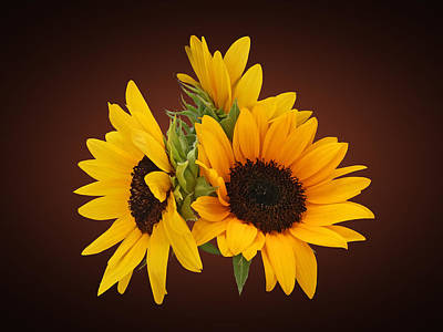 Sunflowers Photograph - Ring Of Sunflowers by Susan Savad