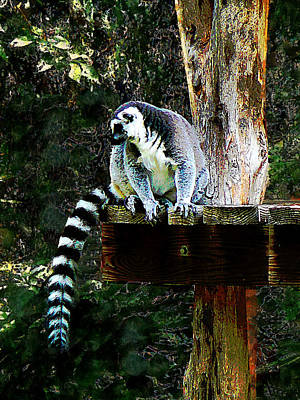 Photograph - Ring-tailed Lemur by Susan Savad