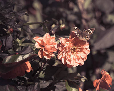 Photograph - R.i.p. Dan Wheldon by Trish Tritz