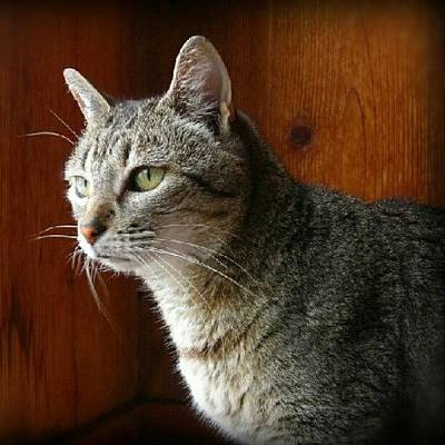 Pet Photograph - R.i.p. Kitty Kitty 6-11-12 <3 A.k.a by Mandy Shupp