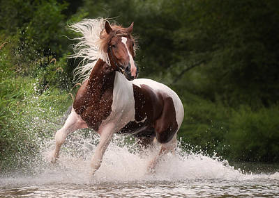 Paint Photograph - River Horse by Tanya Kozlovsky