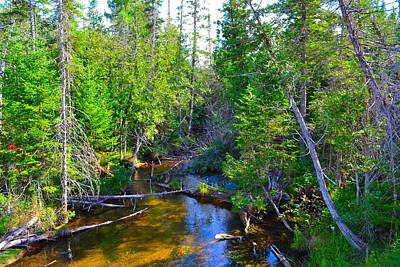 Photograph - River In The Pines by Ted Kitchen