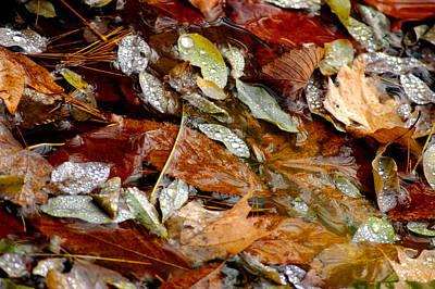 River Leaves Art Print by LeeAnn McLaneGoetz McLaneGoetzStudioLLCcom