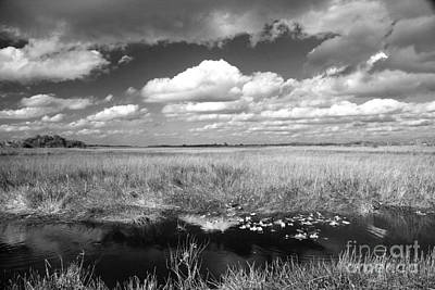 Art Print featuring the photograph River Of Grass - The Everglades by Myrna Bradshaw