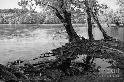 River-washed Roots Print by Susan Isakson