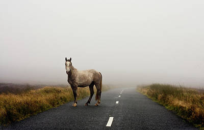Horse Photograph - Road by Deirdre Marie Photography