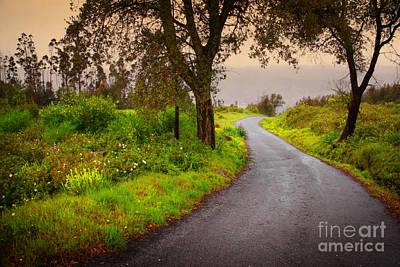 Asphalt Photograph - Road On Woods by Carlos Caetano