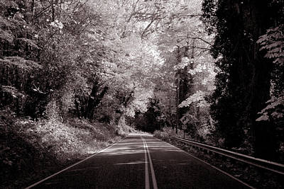 Photograph - Road Through Autumn - Black And White by Kathleen Grace
