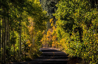 Photograph - Road To Color by Connie Cooper-Edwards